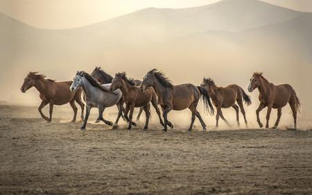 wild horse ride Stok Fotoğraf