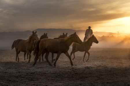 wild horses passing through the daylight 版權商用圖片