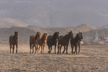 a group of wild horses