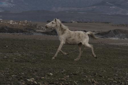 wild horses alone