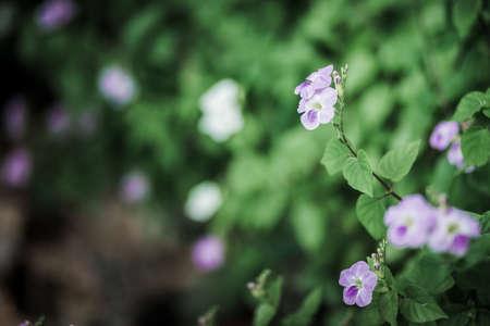 beautifu: Beautifu Flower close-up Selective focus Stock Photo