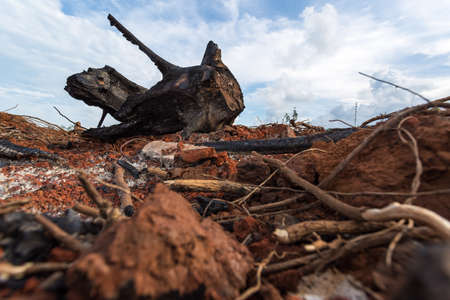remains: black charred remains of  wood as fire
