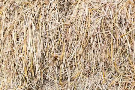 thatch: Messy Thatch roof background