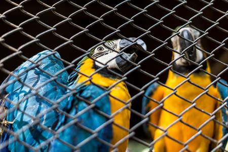 parot: parot in cage Stock Photo