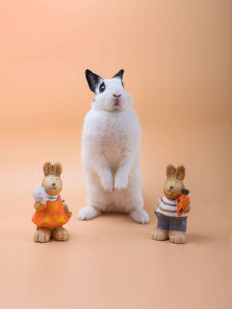 Cute white rabbit with ears and eyes black, standing up n the middle of two plastered rabbits against orange pastel background.  Easy to use for Easter theme with copy space. 写真素材