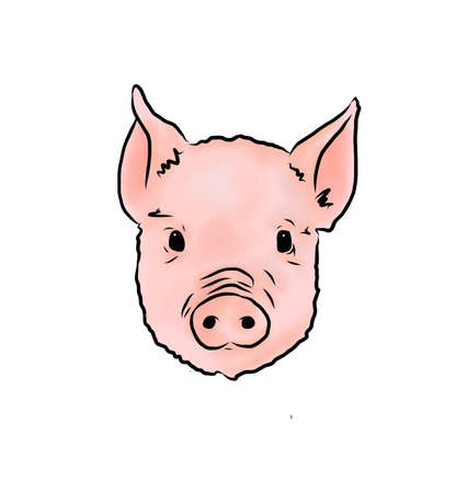 Pig vector Isolated