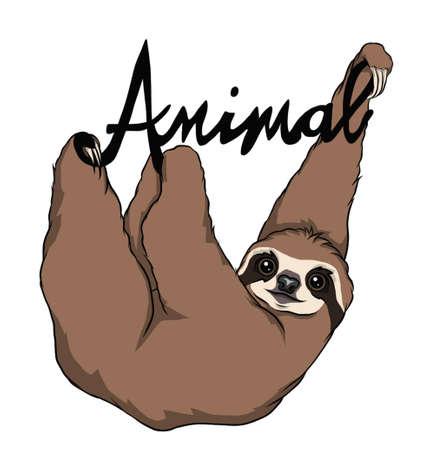 Cute hanging Sloth isolated on white Çizim