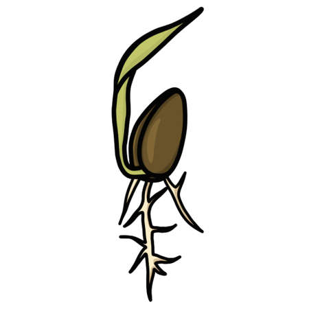 Sprouting Seedling Illustration