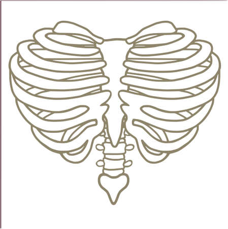 Heart Shaped Rib Cage Lines