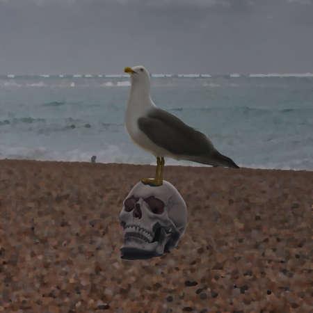 Seagull sitting on Skull