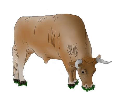 Ox Illustration