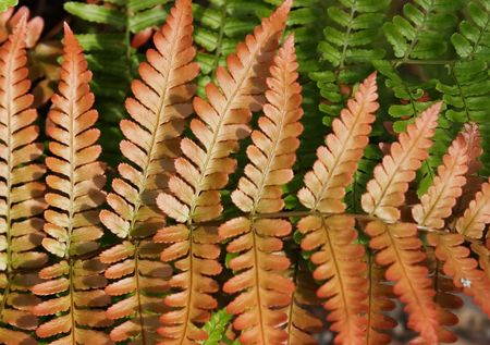 Fern fronds in green and red tones Stok Fotoğraf