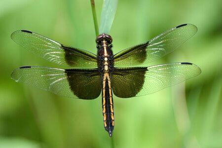 elusive: dragonfly
