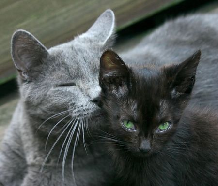 A wary black kitten is comforted by his older brother