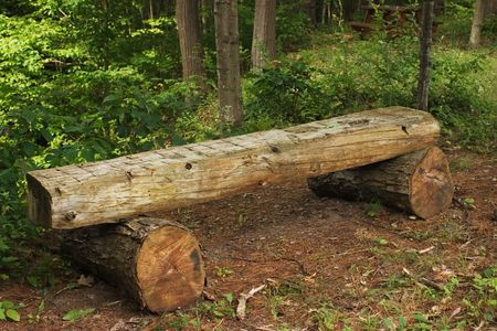 A log bench in the woods