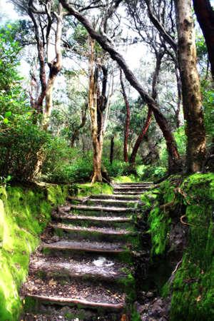vulcanology: Tangkuban Prahu Trail in Bandung Indonesia