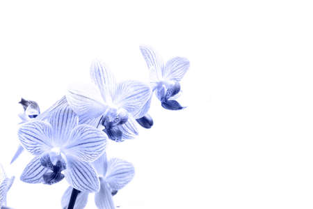 orchid: orchids