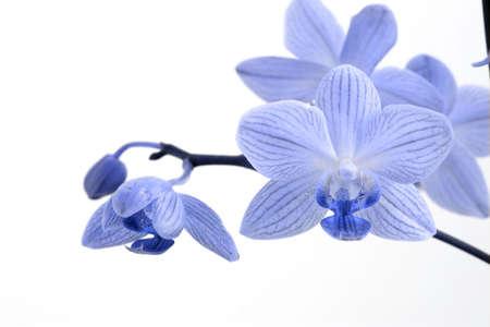 Orchideen  Standard-Bild - 2834492