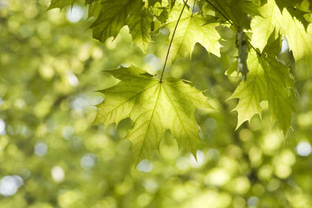 green leaves, shallow focus Stock Photo - 3005097