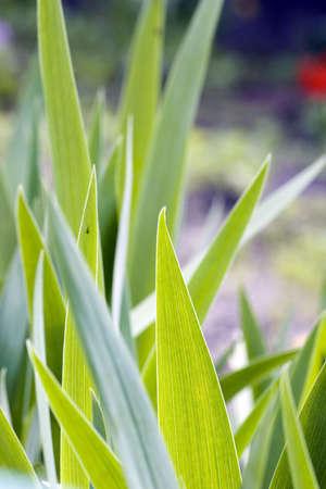 Fresh green grass (shallow DoF) photo