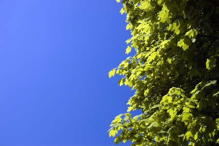 Green leaves on a background of the dark blue sky photo