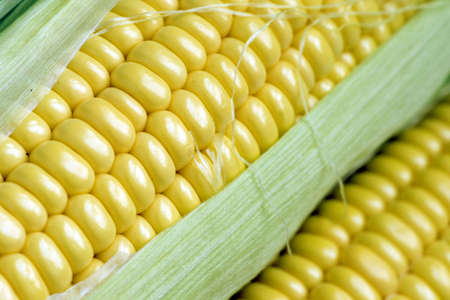 maize cob detail with green leaves Stock Photo - 3381841