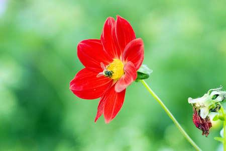flier: Bee in the flower