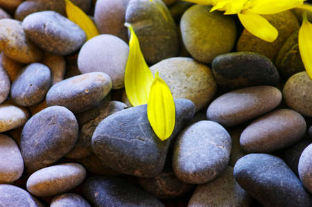 peeble: abstract background with round peeble stones and yellow petals of camomile
