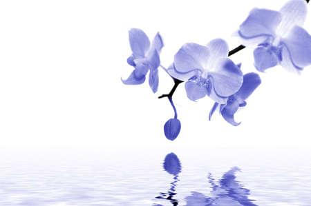 blaue Orchideen mit Wasser. Spa-Konzept. Lizenzfreie Bilder
