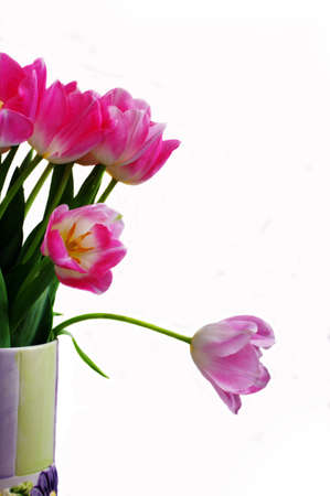 Spring pink tulips in the vase Stock Photo - 4333824