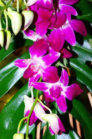 Pink orchids on a green background photo