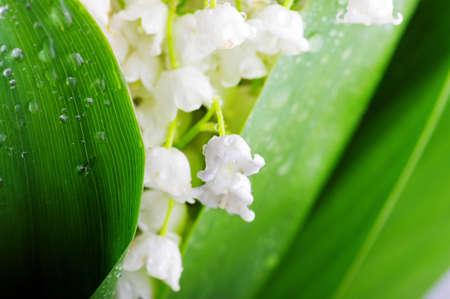 淡い緑の背景に対してスズラン 写真素材