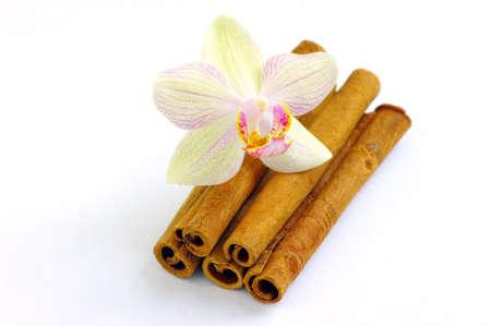 Close up of cinnamon sticks, shallow Dof  photo