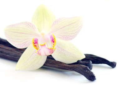 flor de vainilla: Orquídea con granos de vainilla sobre fondo blanco