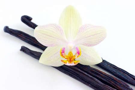 Orchid mit Vanilleschoten auf weißem Hintergrund