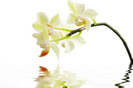 A white orchids with water. Spa concept  Stock Photo