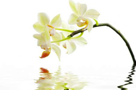 Eine weiße Orchideen mit Wasser. Spa-Konzept