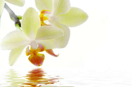 orchids: A orchidee bianche sul concetto sfondo bianco con acqua termale. Archivio Fotografico