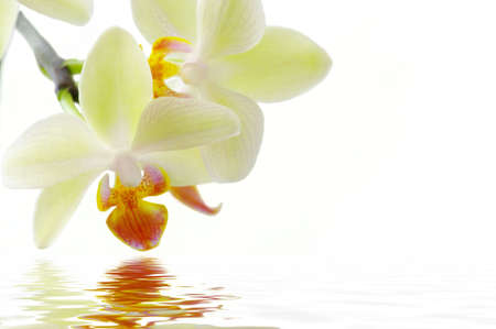 A white orchids on the white background� Spa concept with water.
