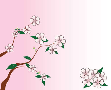 Branch of Cherry Flowers on the pink background, spring is come.Illustration flowers of spring with place for text. Vector