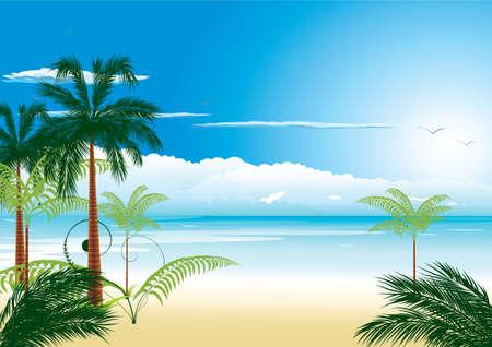frutas tropicales:  Hermosa playa tropical con mar-ave y coco-Palma