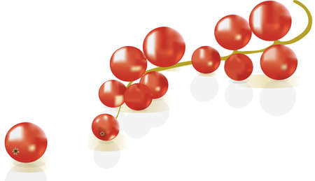 red currant: red currant over white background with shadow of currant