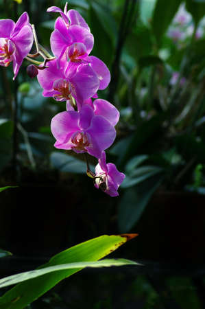 Beautiful pink orchid in sunlight over natural background Stock Photo - 6981312