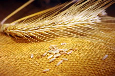 ビンテージ スタイルの小麦の穂のある静物 写真素材