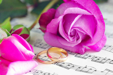wedding rings and pink roses  Stock Photo