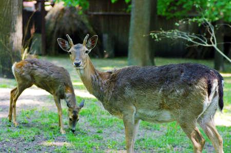 deer buck standing in an open field.  photo