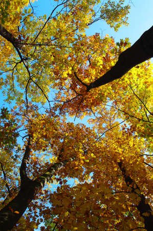 Autumn oak leaves on blue sky with clouds  photo
