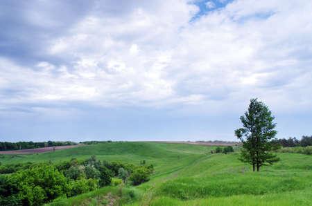 rolling hills: A tree in a field of long green grass