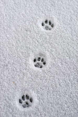 huellas de animales: Hare rastro en la nieve fresca