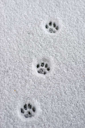 two animals: Hare trace on a fresh snow